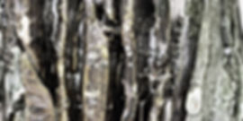 SULTANOV DMITRII | Ceramics | Sounds of Animals / 15Y