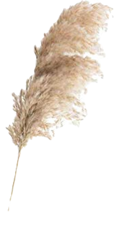 pampas%20dried_edited.png