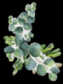 eucalyptus_edited_edited.png