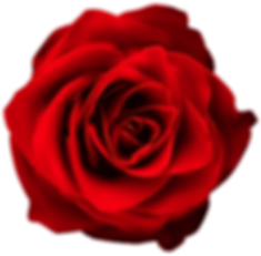 red-rose-transparent-11546677557e8qpla6j