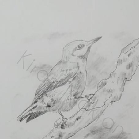 Wildlife Art | Kiran Moktan