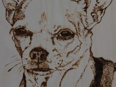 Lnewbury_dog1.jpg