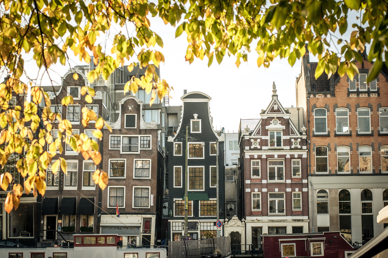 Néerlandais 2