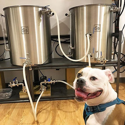 Meet Citra the brew dog!  Hanging out to