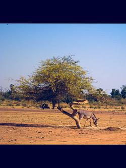 Mali burkina-3