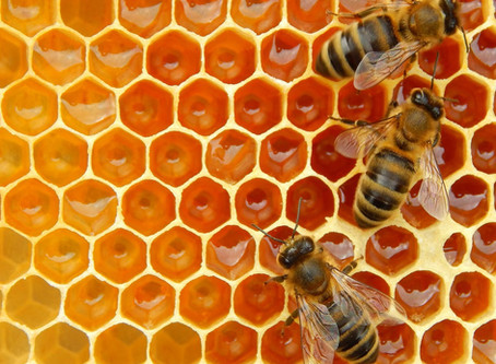 Bees, Pollination and Climate Change: a not so sweet overview