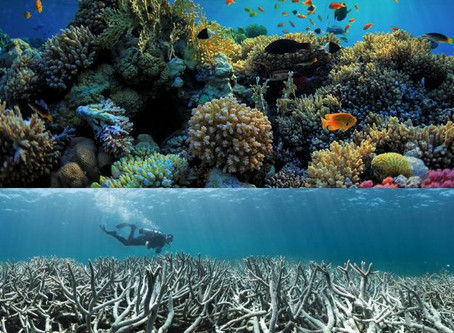 Climate Change, coral bleaching and ocean acidification: will the Great Barrier Reef remain great?
