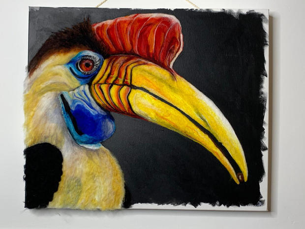 Red knobbed hornbill