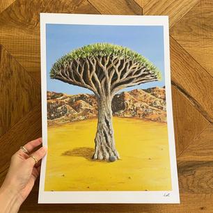 'Dragon tree'