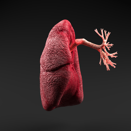 lungs1.png