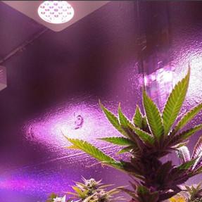 duolux 600 led grow light 6.jpg