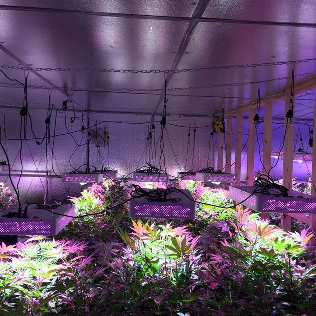 solo 400 cob led grow light 2.jpg