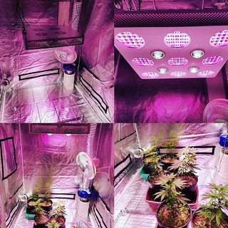 duolux 600 led grow light 3.jpg