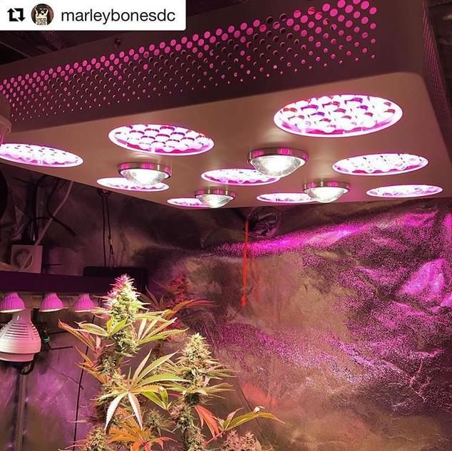 solo 600 led grow light 1.jpg