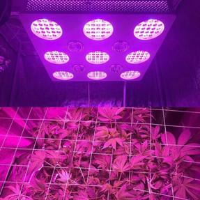 hortibloom led grow light 3.jpg