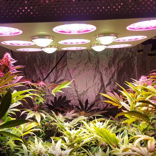 solo 600 led grow light 11.jpg