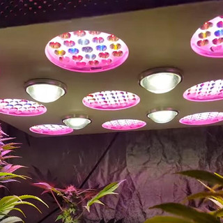 solo 600 led grow light 9.jpg