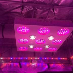duolux 600 led grow light 8.jpg