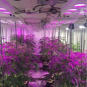 duolux 600 led grow light 10.jpg