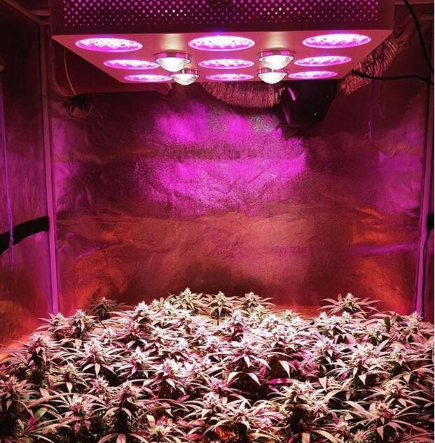 hortibloom led grow light 2.jpg