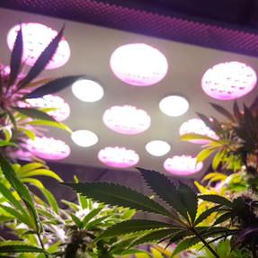solo 600 led grow light 10.jpg