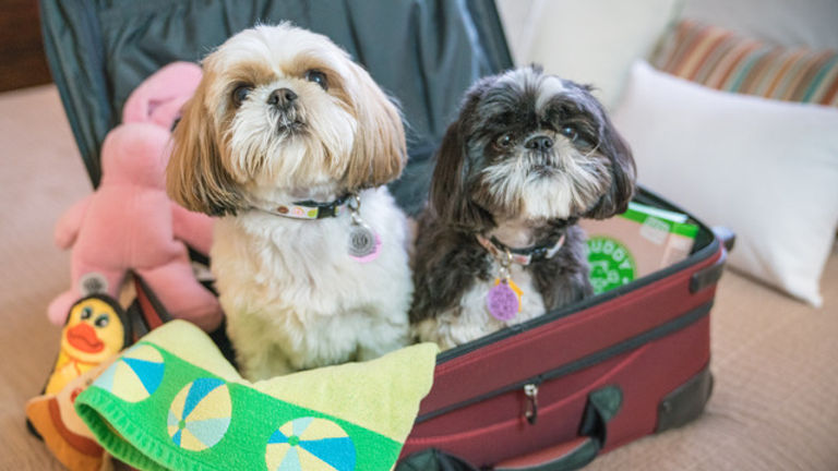 Happy-Tails-Dogs-in-Suitcase.jpeg