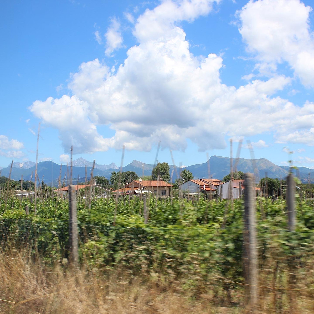 Photograph of the Italian countryside in the Viareggio municipality, Lucca Province, Tuscany, Italy. Landscape views of fields, houses and mountains in the distance. There are large fluffy clouds and a blue sky.  Photograph taken by Els Christensen.