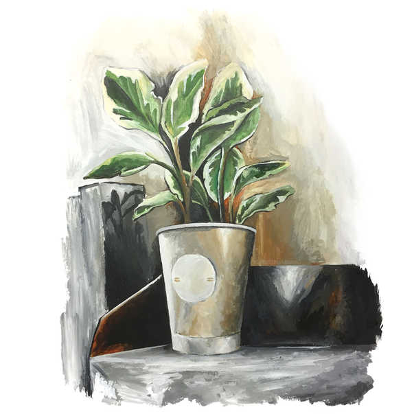 Coffee shop plant