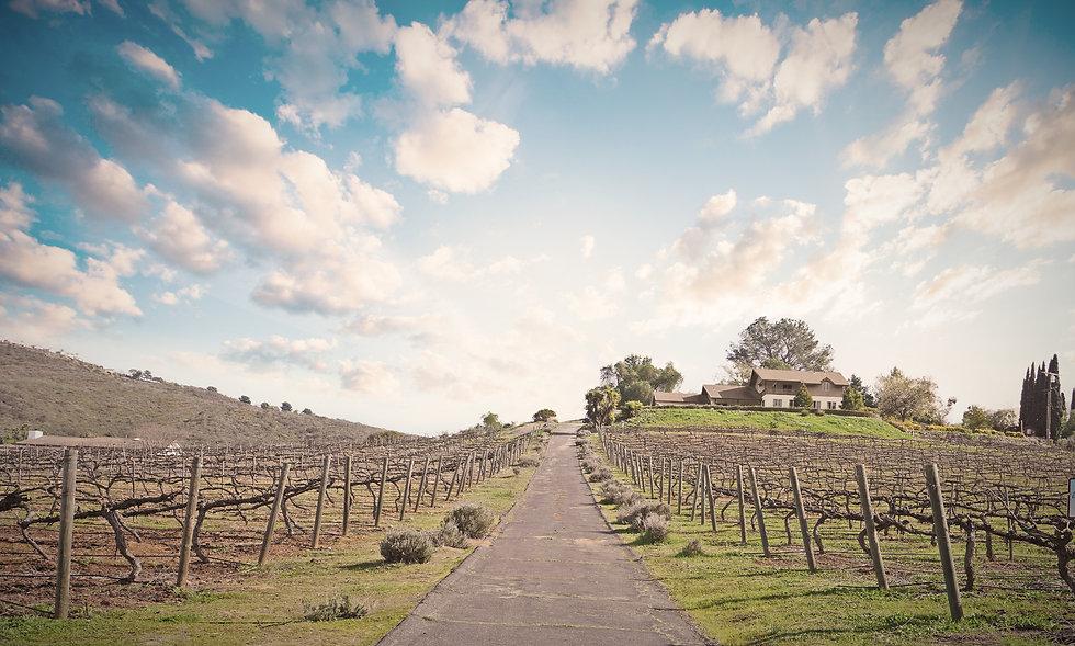 2021-vineyard-spring3_edited.jpg