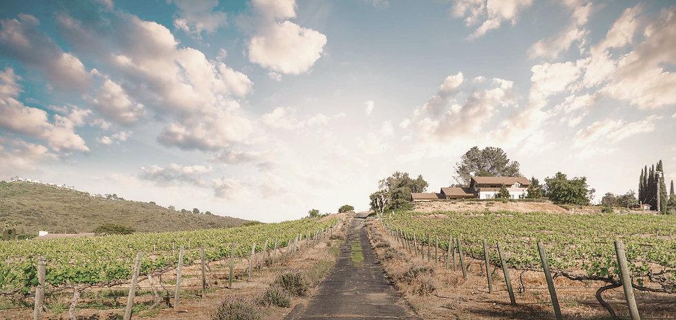 2021-vineyard-late-spring3_edited_edited