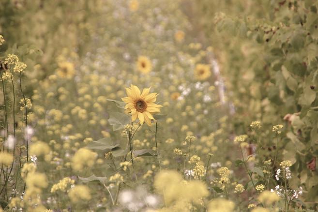 nature-plant-vineyard-field-meadow-prair