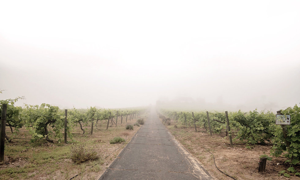 Twin Oaks Valley Winery in the fog