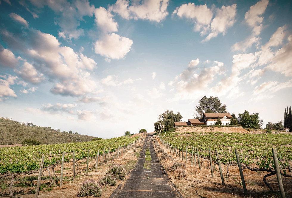 2021-vineyard-late-spring2_edited_edited_edited_edited.jpg