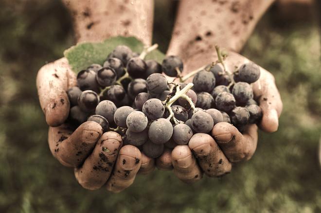 Winemaking-Image_edited.jpg