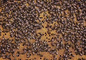 Canva - Swarm Of Honey Bees.jpg