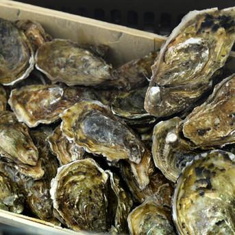 Le ostriche sono i più regali dei tesori marini ma non sono tutte uguali, chiedi al nostro personale quale scegliere in base ai tuoi gusti.