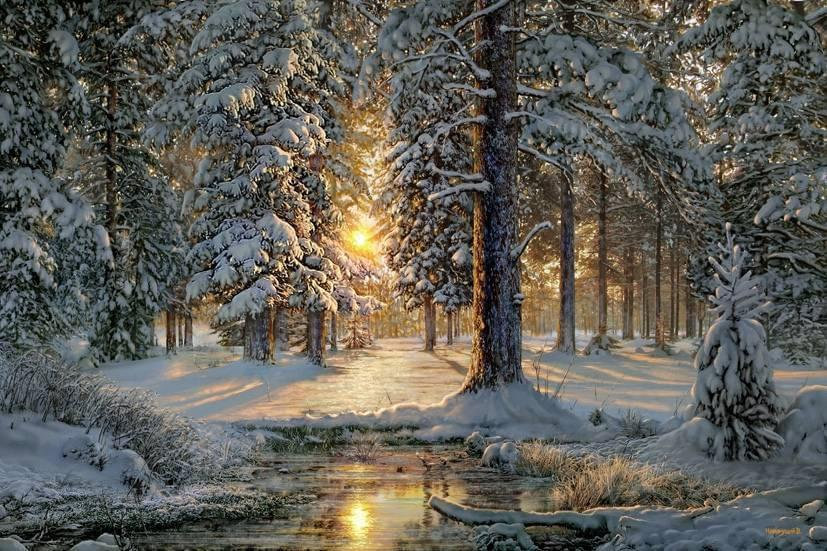 Nature- Winter Wonderland