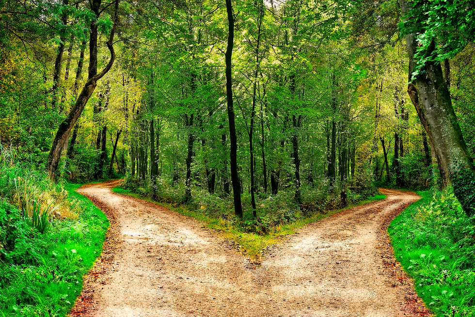 A forest path divides in two different d