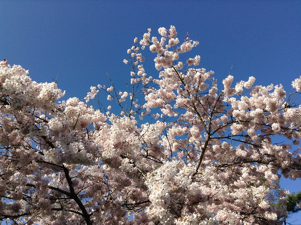 spring_edited.jpg