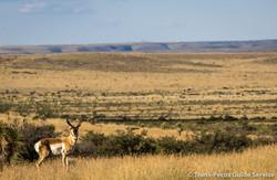 TPGS_Antelope Hunt 2017-8