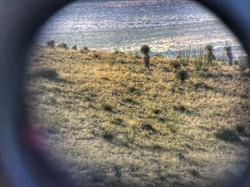 Trans Pecos Guide Service Antelope