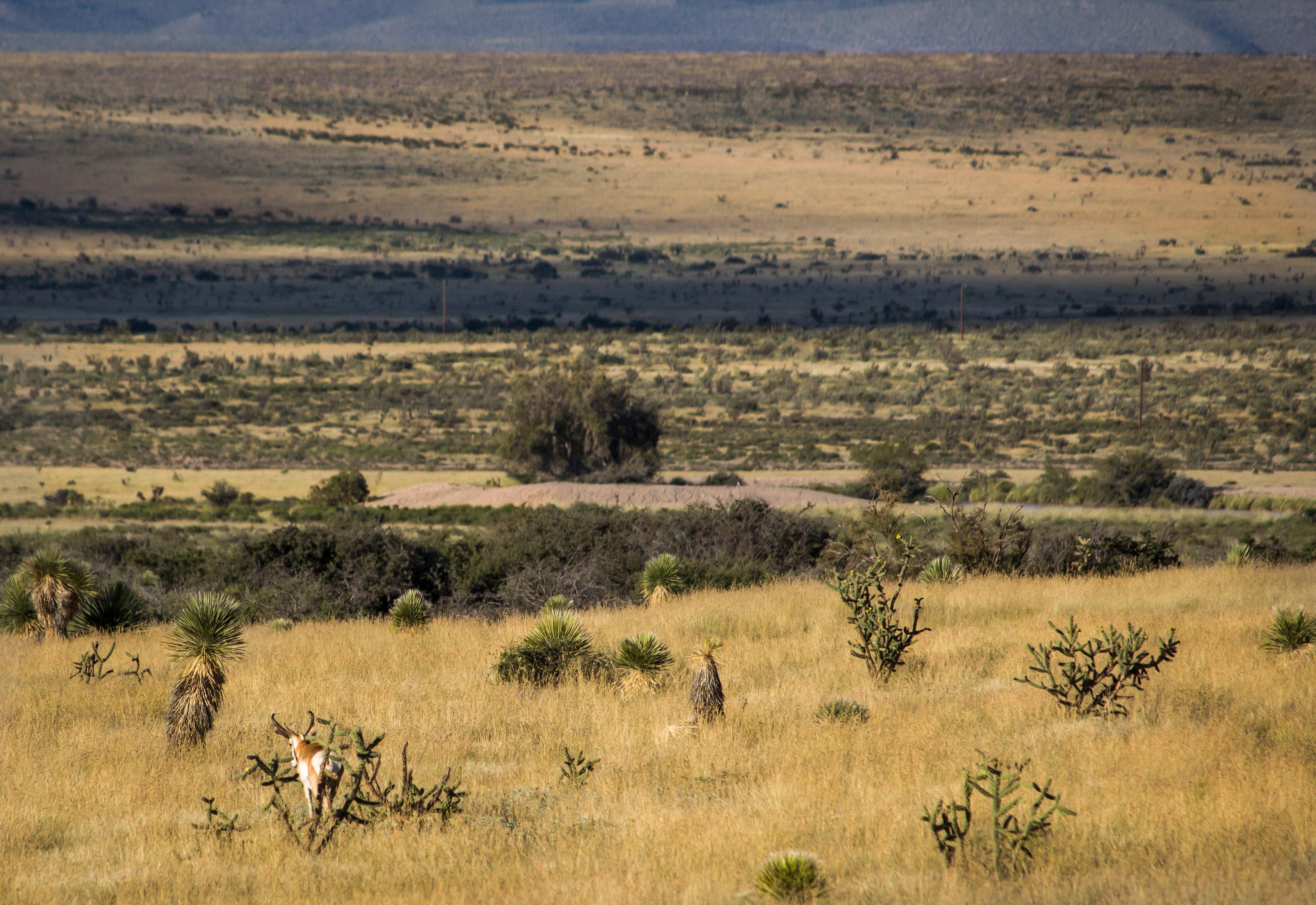 TPGS_Antelope Hunt 2017-7