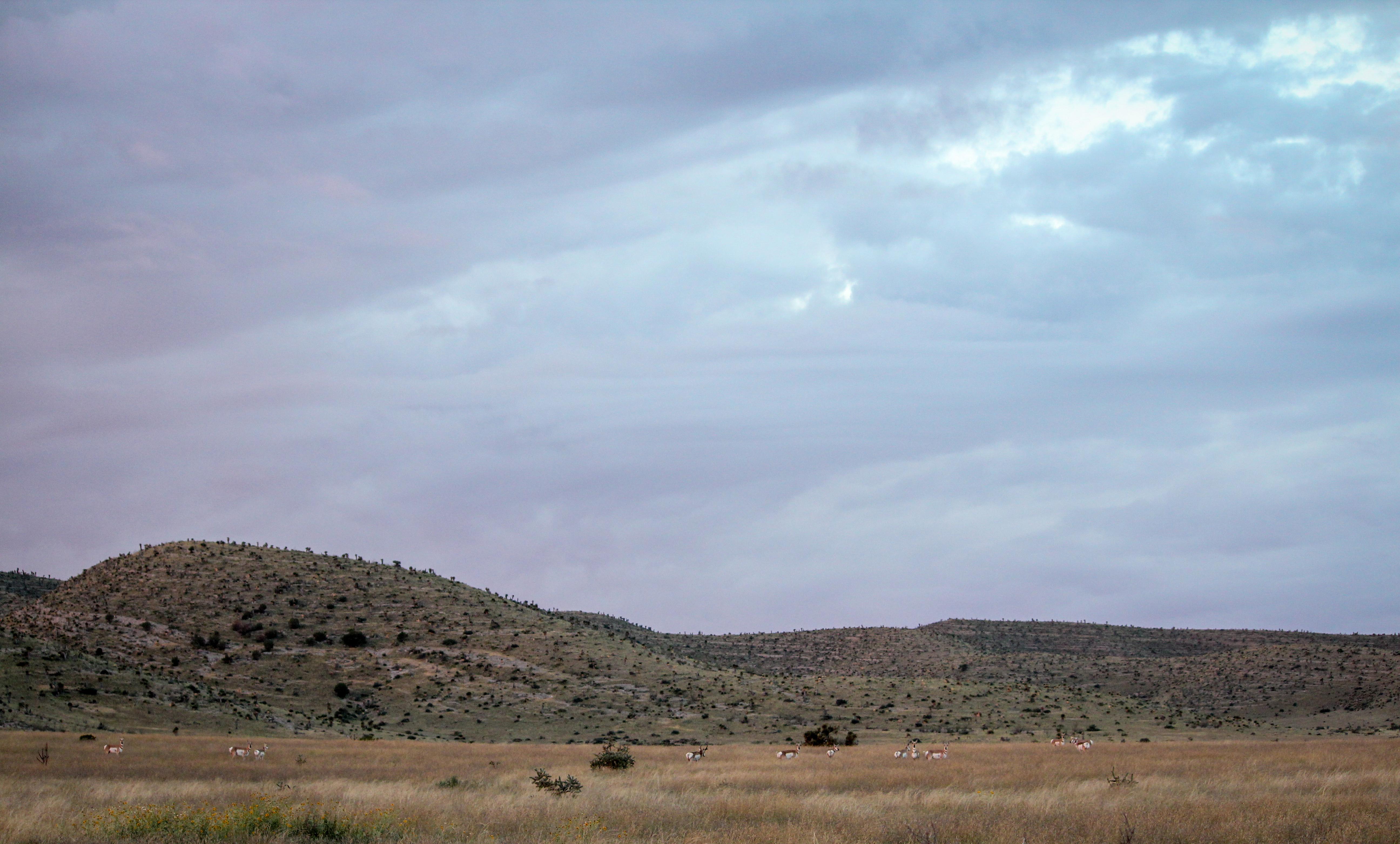 TPGS Antelope Hunt