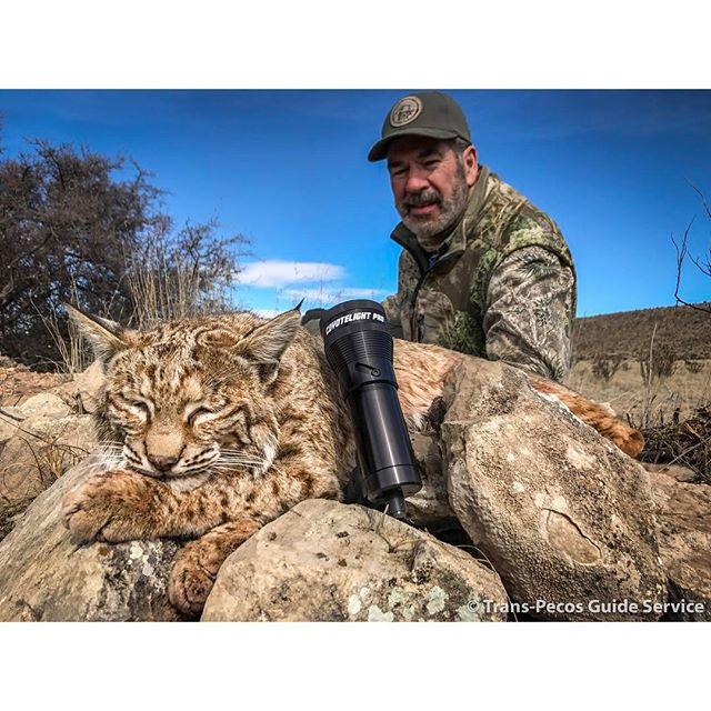 Texas Bobcat