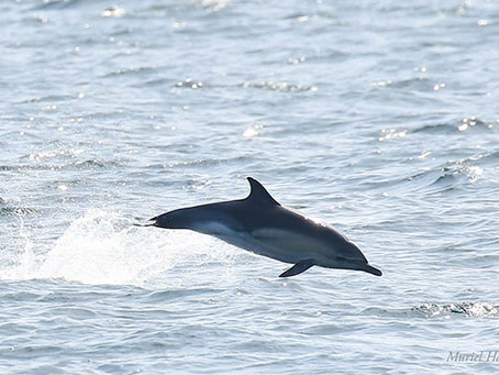 National Whale and Dolphin Watch 2019