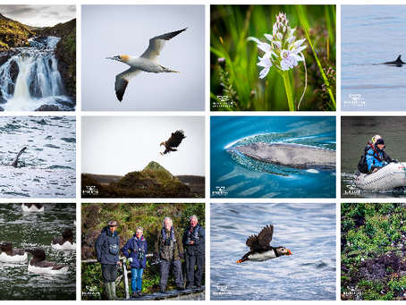 Memories of a typical wildlife cruise - 2019