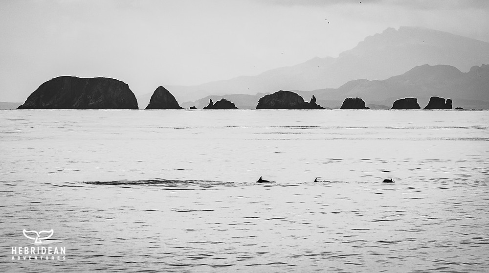 Dolphins and the Galtas