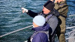 Wellness-boosting wildlife watching cruises with Hebridean Adventures