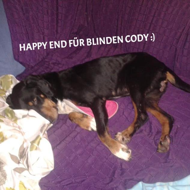 glücklicher_Cody_edited.jpg