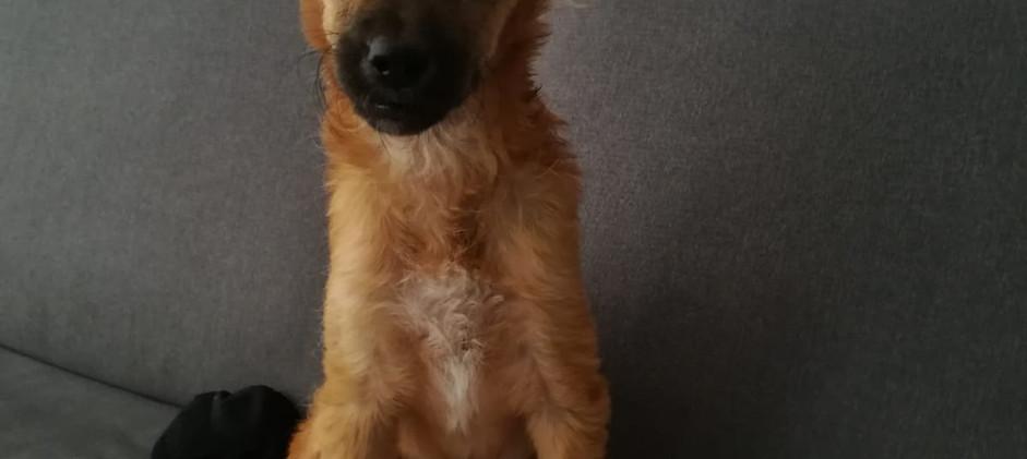Baby Luna